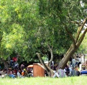 Faute de locaux, les étudiants de l'Université pédagogique national (UPN) suivent les cours sous les arbres, Kinshasa 6 février 2013. Ph. Kifinda